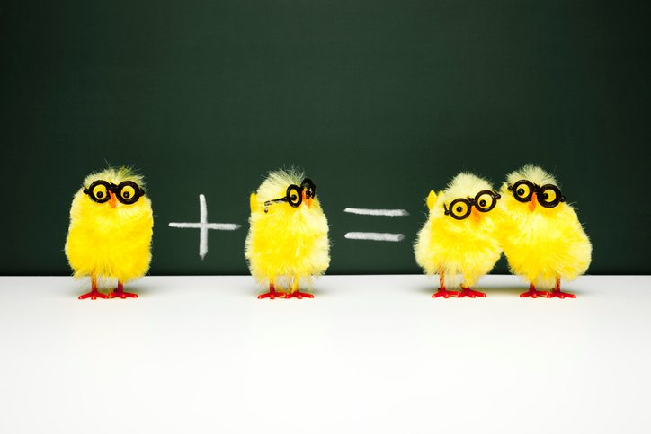 Concept photography of chicks showing math basics.