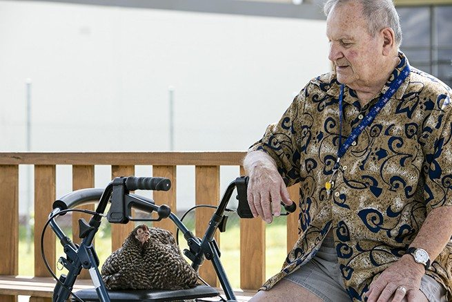 "Aged care resident Aube with ""Priscilla"" - Photo courtesy of HenPower"