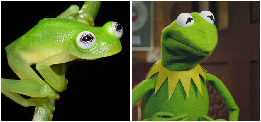 kermit-and-real-kermit